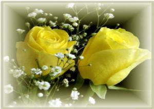 Happy 73rd Birthday Mom. Yellow roses are her favorite.